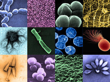 Archaea on human skin | Skin Microbiome