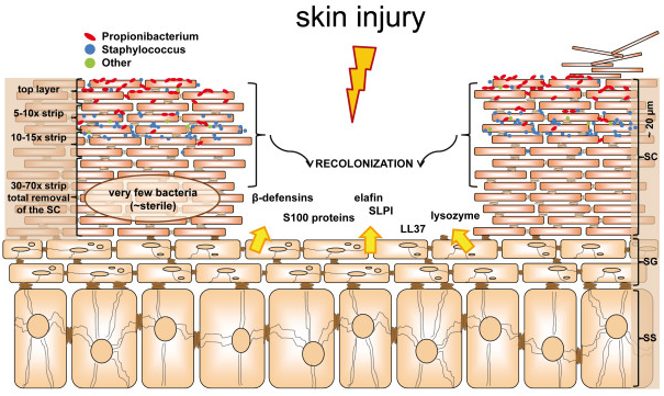 Medical Journals | Skin Microbiome