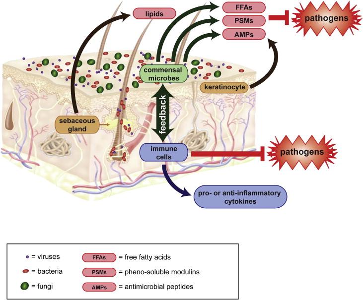 Immunity | Skin Microbiome